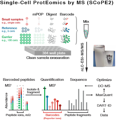 Single cell proteomics by mass-spectrometry SCoPE2 | quantifying proteins in single cancer and stem cells